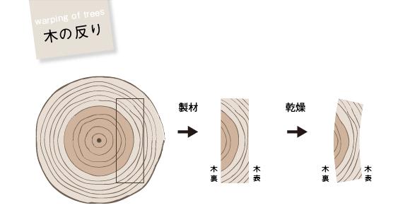 木の反り(乾燥させると木表が凹む)